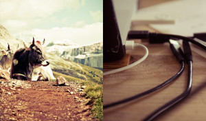 img-flickr-animal-desk